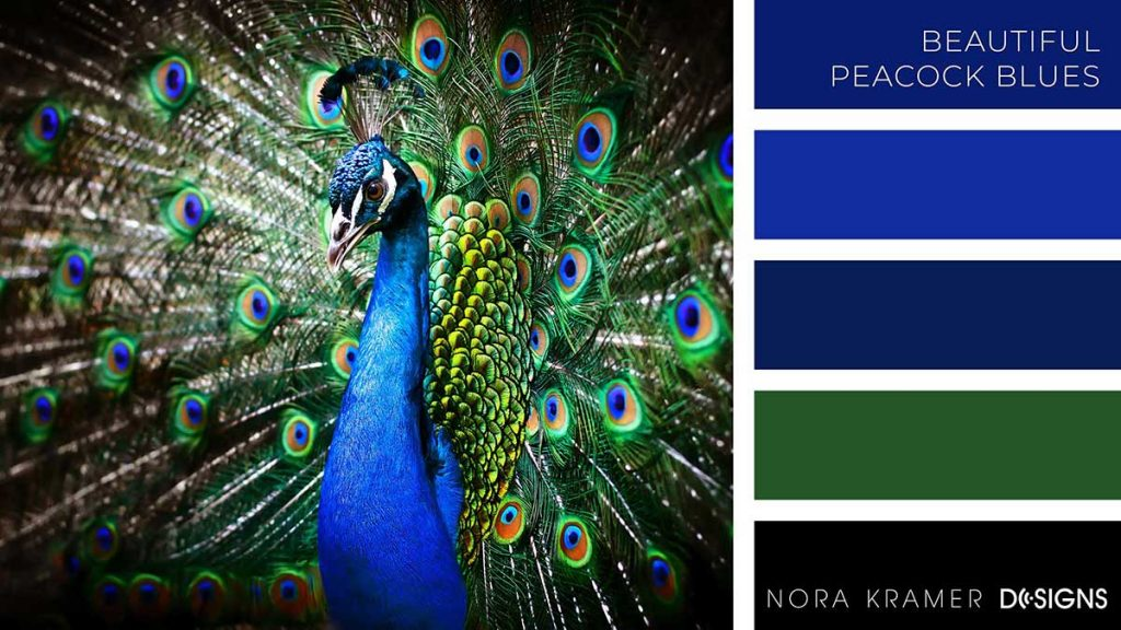 Beautiful Peacock Blues Color Palette